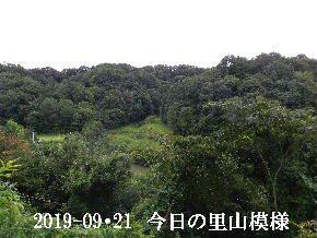 2019-09・21 今日の里山模様・・・ (3).JPG