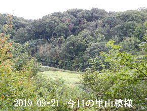 2019-09・21 今日の里山模様・・・ (4).JPG