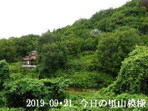 2019-09・21 今日の里山模様・・・ (5).JPG