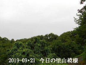 2019-09・21 今日の里山模様・・・ (6).JPG