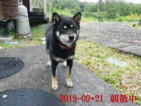 2019-09・21 今日の麻呂 (6).JPG