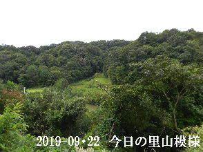 2019-09・22 今日の里山模様・・・ (3).JPG