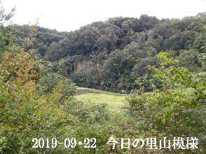 2019-09・22 今日の里山模様・・・ (4).JPG