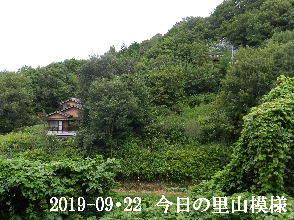 2019-09・22 今日の里山模様・・・ (5).JPG