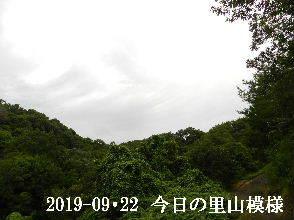 2019-09・22 今日の里山模様・・・ (6).JPG