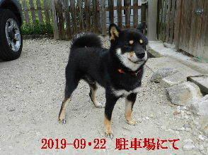 2019-09・22 今日の麻呂 (1).JPG