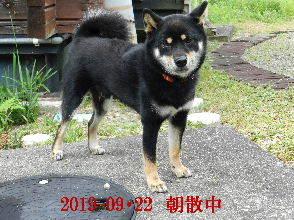 2019-09・22 今日の麻呂 (4).JPG