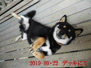 2019-09・22 今日の麻呂 (7).JPG