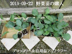 2019-09・22 我が家のスナップ・・・ (2).JPG