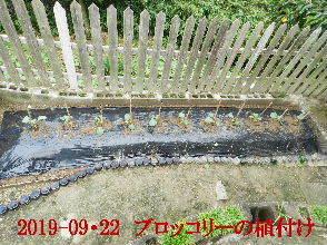 2019-09・22 我が家のスナップ・・・ (4).JPG