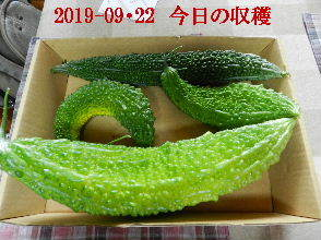 2019-09・22 我が家のスナップ・・・ (7).JPG