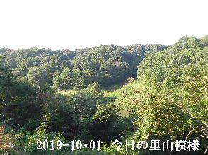 2019-10・01 今日の里山模様・・・ (3).JPG