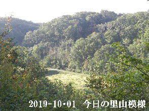2019-10・01 今日の里山模様・・・ (4).JPG