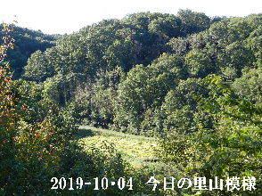 2019-10・04 今日の里山模様・・・ (4).JPG