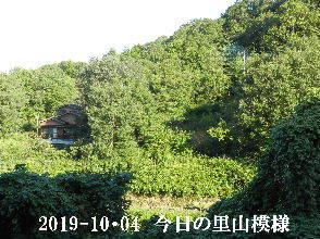 2019-10・04 今日の里山模様・・・ (5).JPG