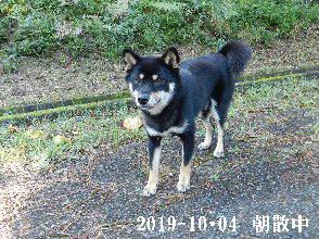 2019-10・04 今日の麻呂 (7).JPG
