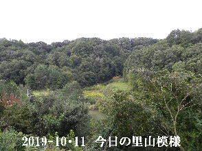 2019-10・11 今日の里山模様・・・ (3).JPG