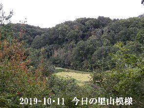 2019-10・11 今日の里山模様・・・ (4).JPG
