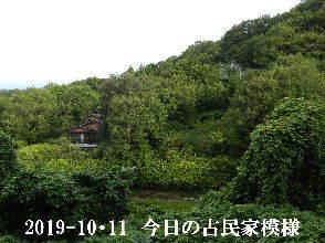 2019-10・11 今日の里山模様・・・ (5).JPG