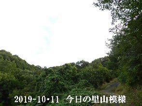 2019-10・11 今日の里山模様・・・ (6).JPG