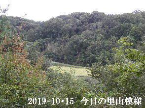 2019-10・15 今日の里山模様・・・ (4).JPG