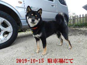 2019-10・15 今日の麻呂 (4).JPG