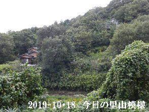 2019-10・18 今日の里山模様・・・ (5).JPG