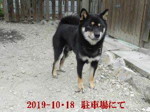 2019-10・18 今日の麻呂 (3).JPG