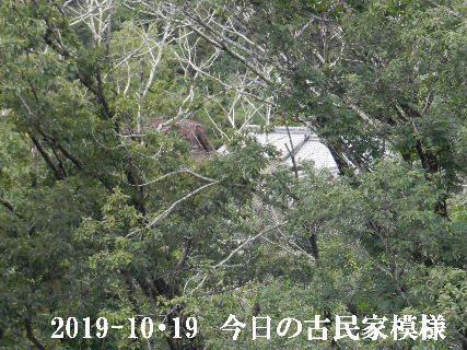 2019-10・19 今日の古民家模様.JPG