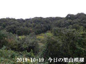2019-10・19 今日の里山模様・・・ (3).JPG