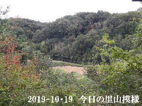 2019-10・19 今日の里山模様・・・ (4).JPG