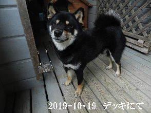 2019-10・19 今日の麻呂 (1).JPG