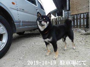2019-10・19 今日の麻呂 (4).JPG
