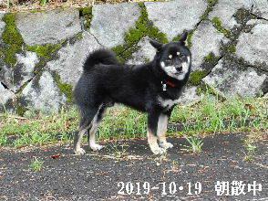 2019-10・19 今日の麻呂 (5).JPG