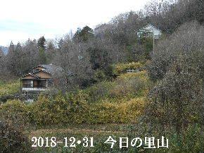 258-12・31 今日の里山は・・・ (4).JPG