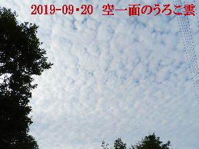 今日の里山は・・・ (2).JPG